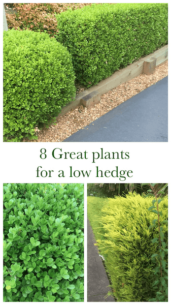 8 great plants for a low hedge