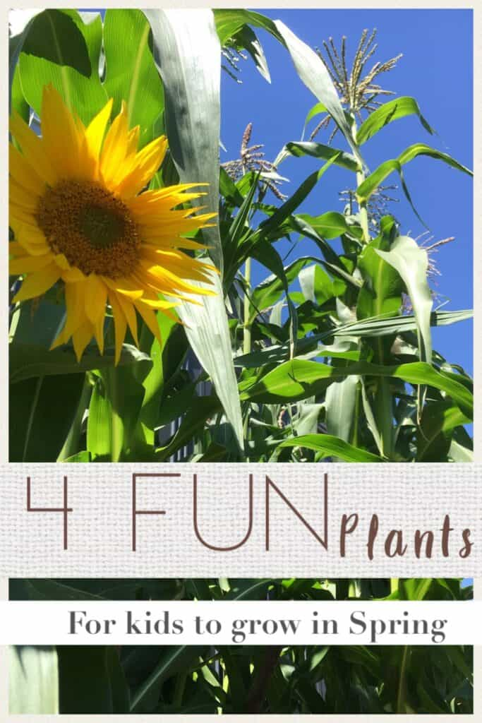 4 fun plants for kids to grow in Spring