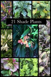 21 Shade plants great for Melbourne, Australia