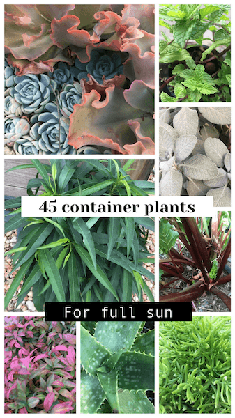 45 Container plants for full sun