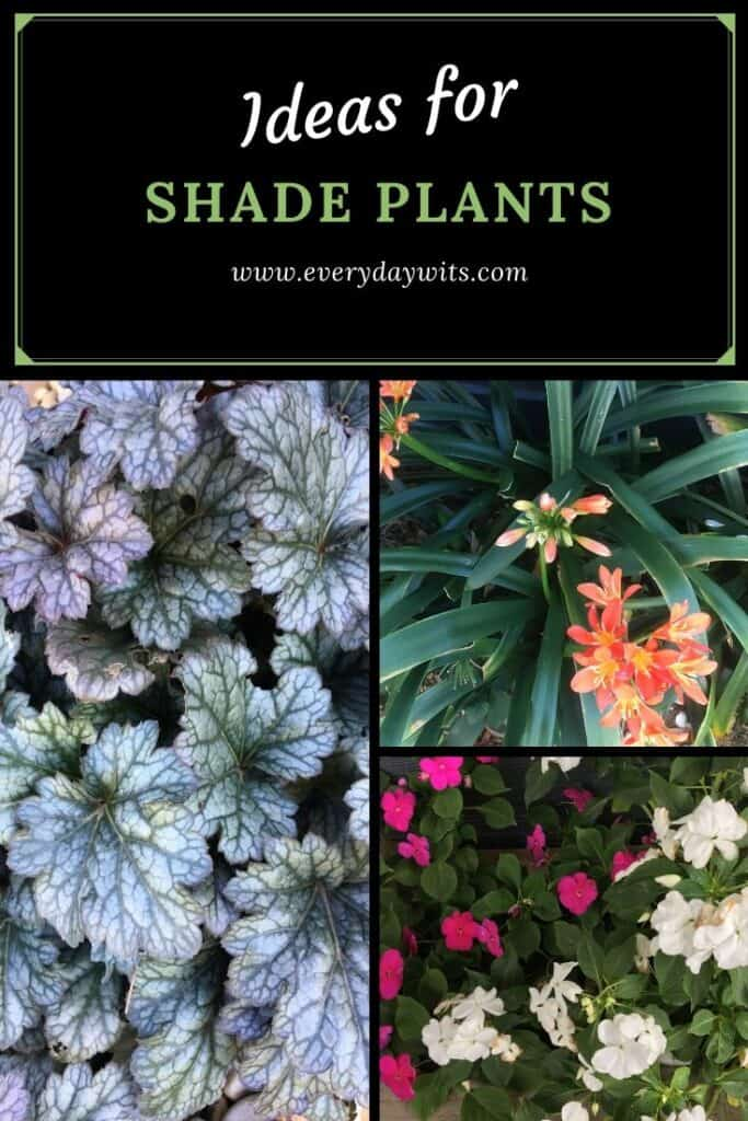 Shade ideas for plants
