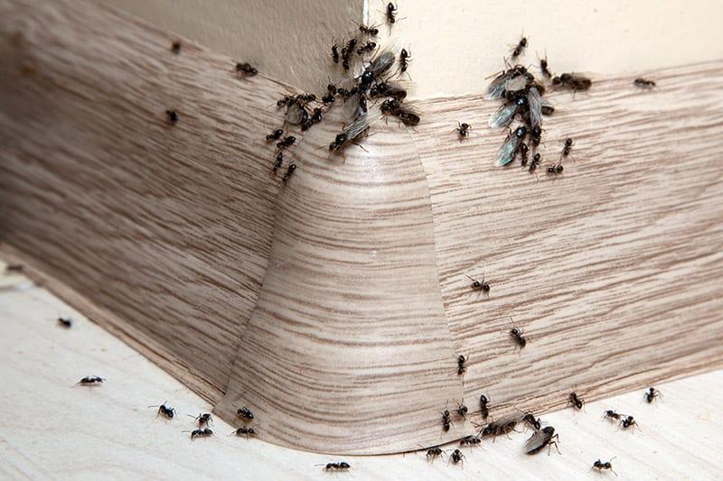 GHMS Home Pest Control Services