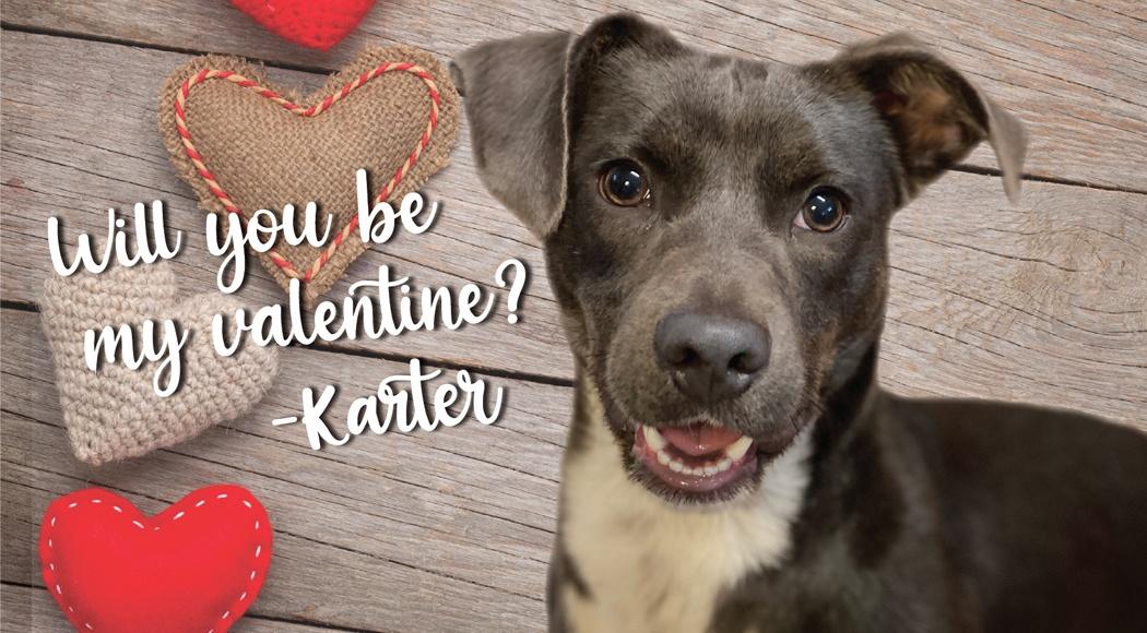 Dog for adoption at Northshore Humane