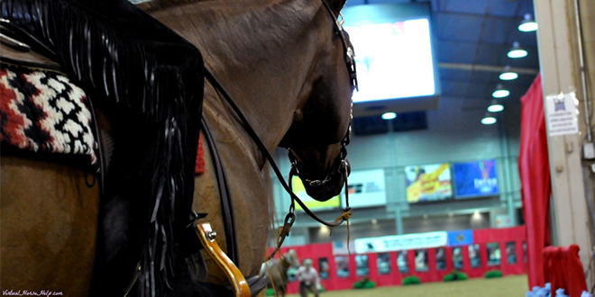 Horse Shows