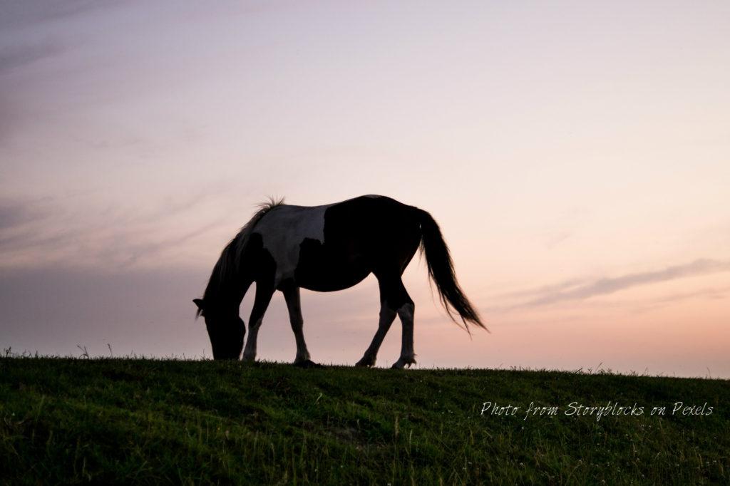 horses sherwood park strathcona county