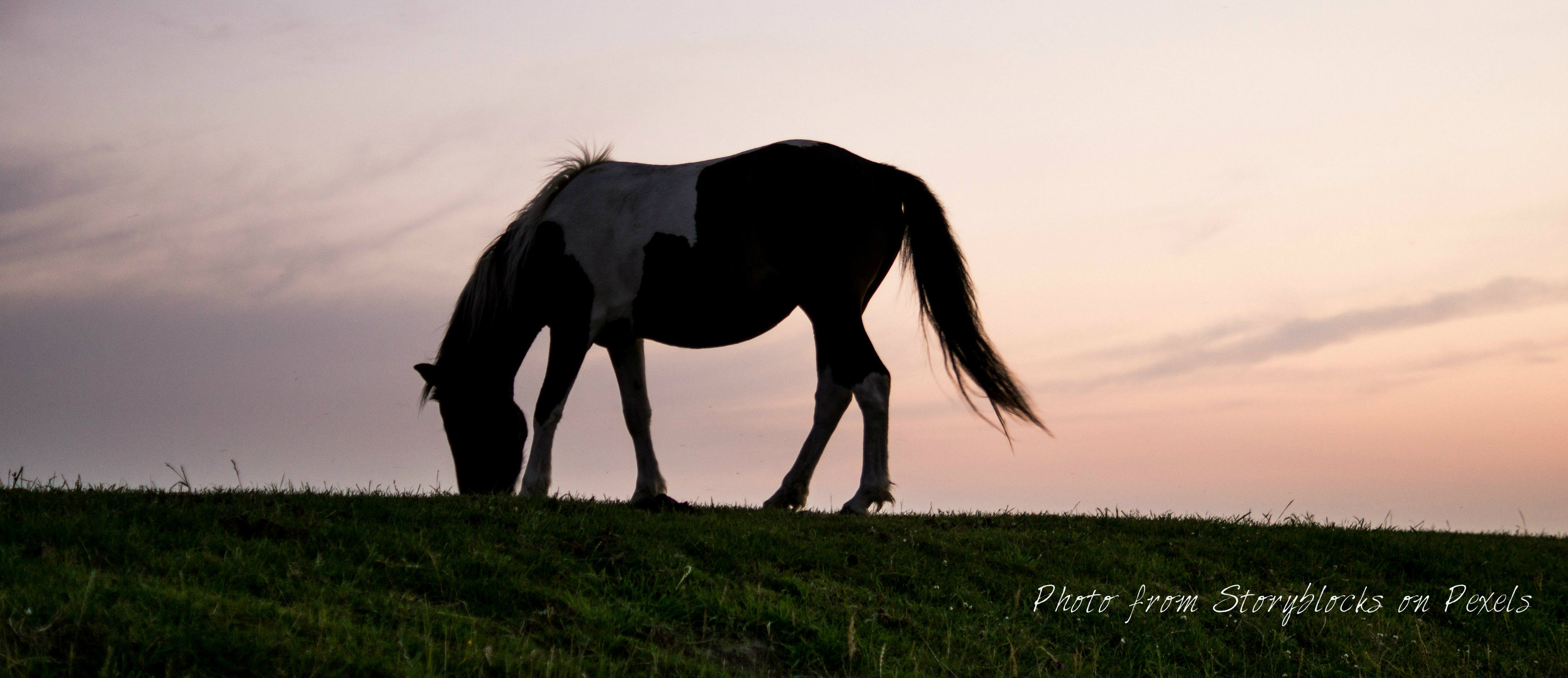 horses sherwood park