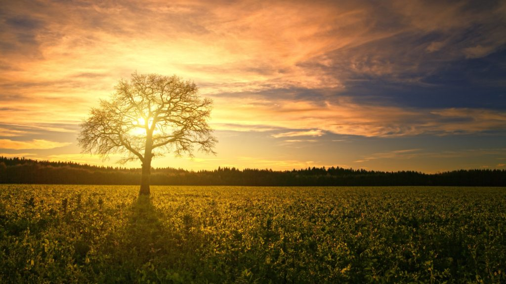 agriculture-clouds-crop-1110663