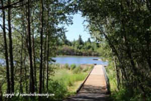 boardwalk at a lake