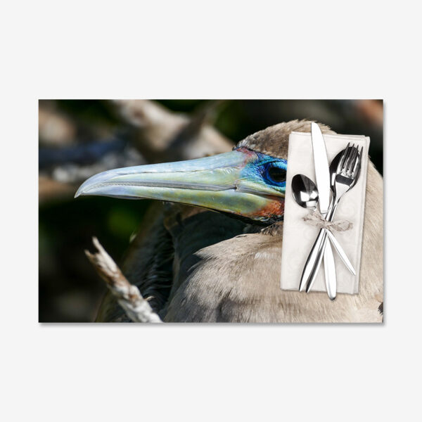 Blue-Eyed Red-Footed Booby, Galápagos Islands