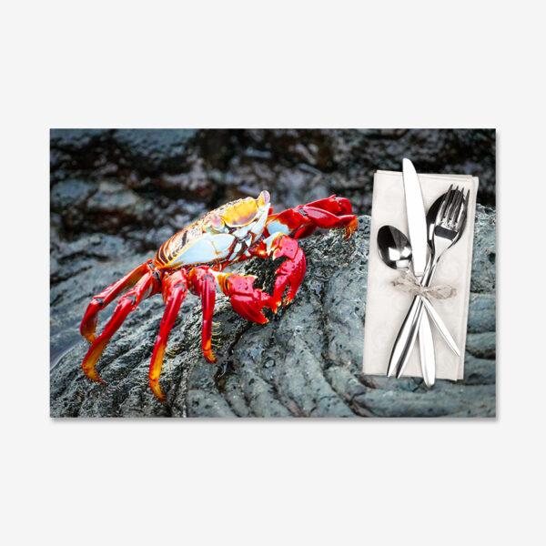Lava Crab, Galápagos Islands