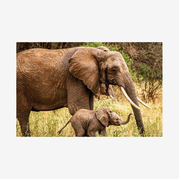 Mamma & Smiling Baby Elephant, Tanzania