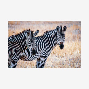 Two Zebras, Tanzania