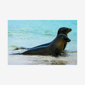 Seal Yoga, Galápagos Islands