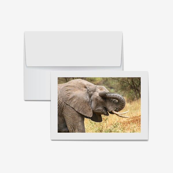 Elephant Trunk, Tanzania