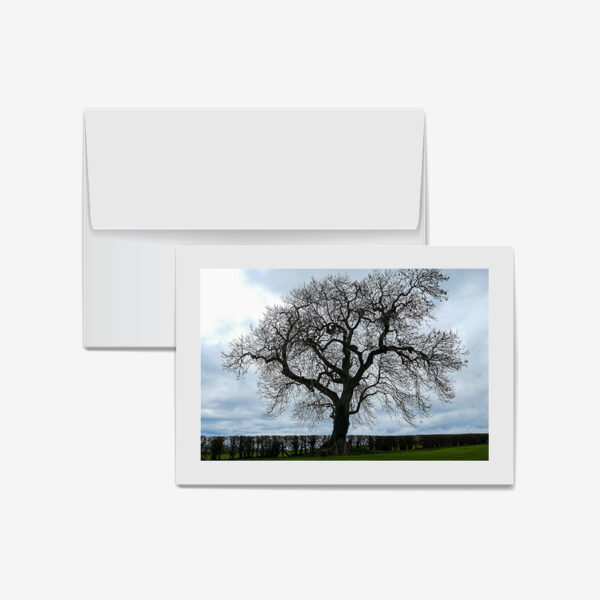 Sacred Tree, Ireland