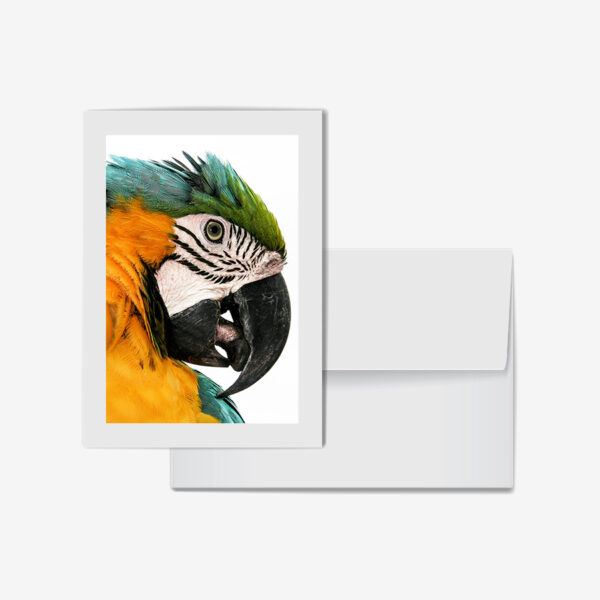 Macaw, Costa Rica