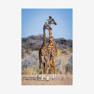 Two Giraffes, Tanzania
