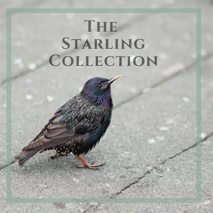 The Starling Collection