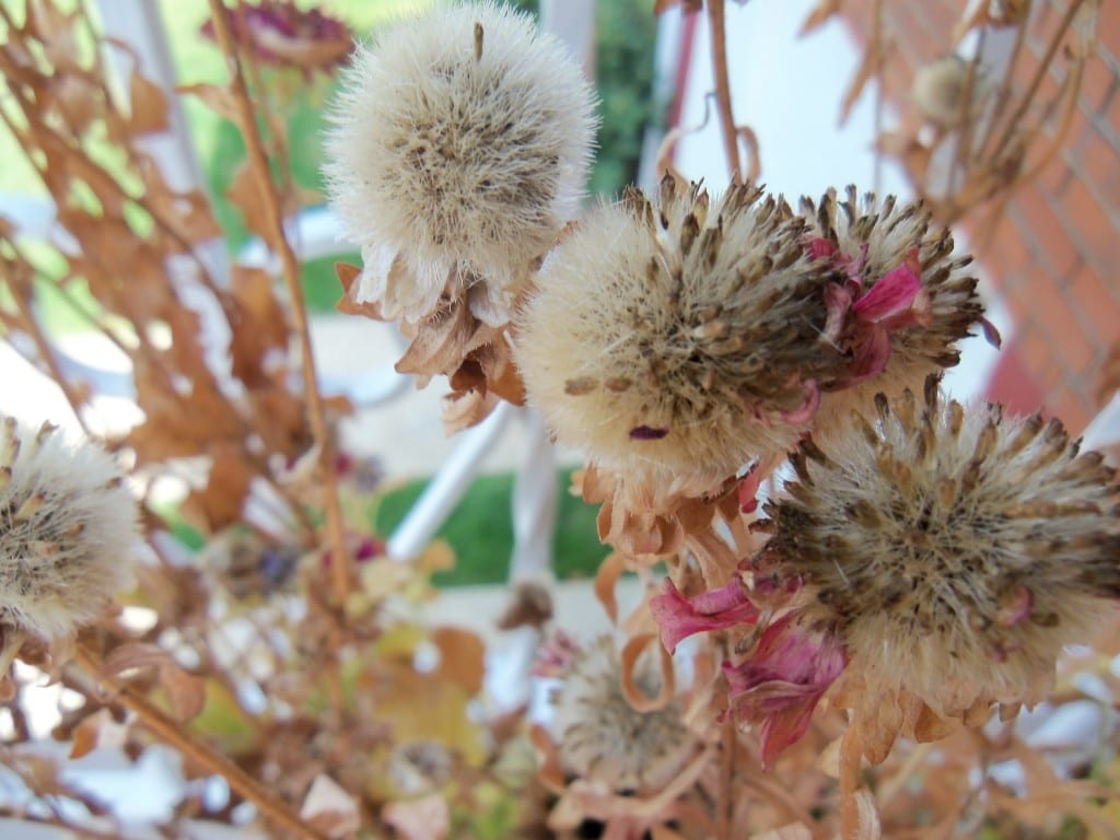 Tucking in Your Garden: Preparing Your Garden for Winter