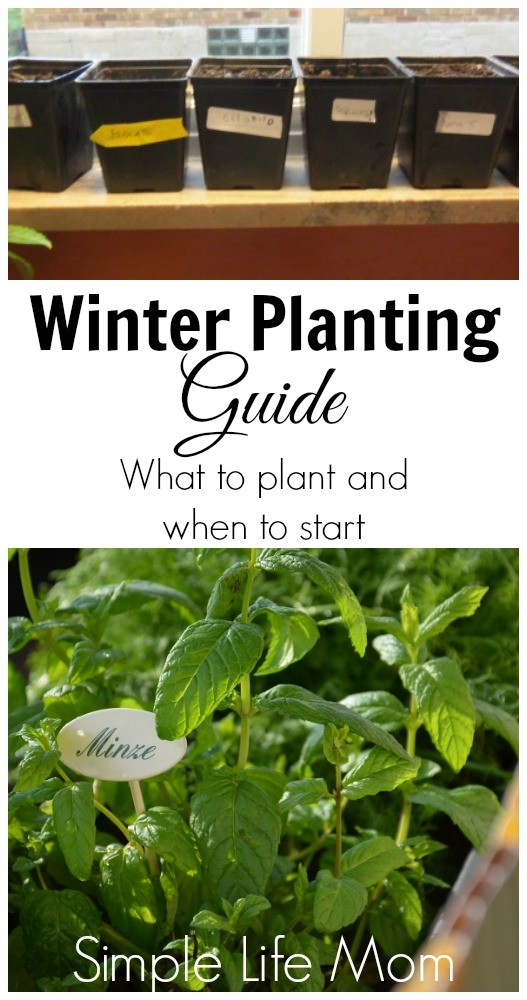 Winter Planting Guide