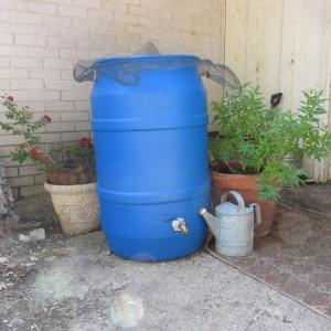 Featured on the Homestead Blog Hop -Rain Rain Come Again, Rain Barrel is Ready and Waiting