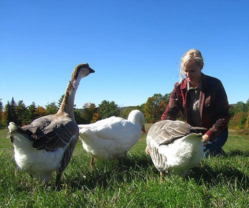 Homestead Blog Hop Feature - Treats for Geese