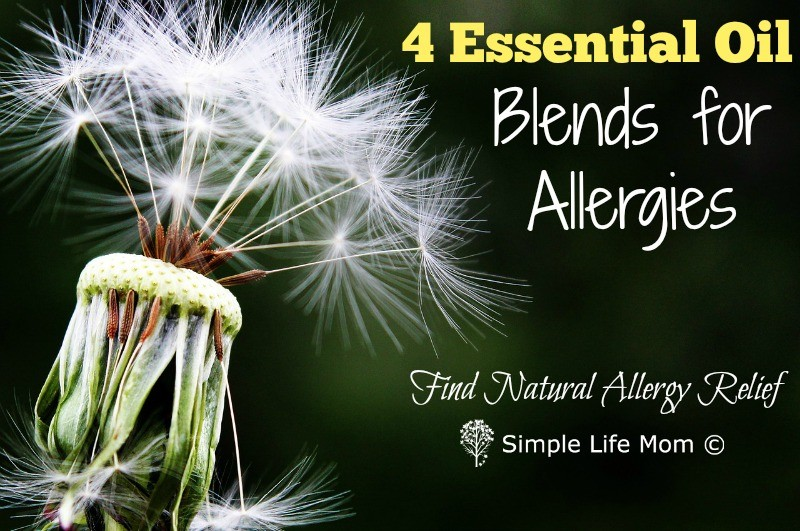 Essential Oil Blends for Allergies with peppermint, eucalyptus, bergamot, lemon, and other natural oils to help give allergy relief by Simple Life Mom