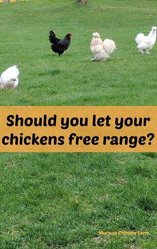 Homestead Blog Hop Feature free_range_chickens