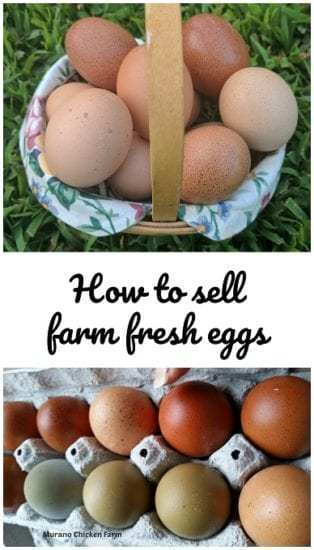 Homestead Blog Hop Feature - How to sell farm fresh eggs