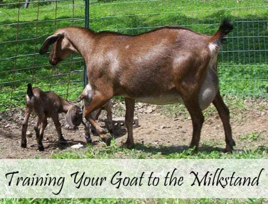 Homestead Blog Hop Feature - Oak Hill Homestead