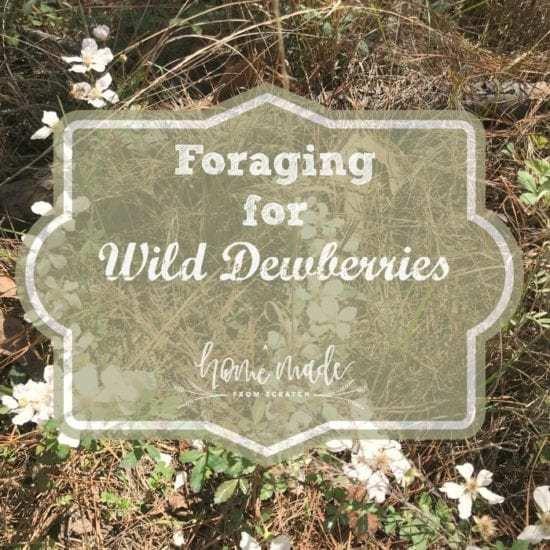 Homestead Blog Hop Feature - foraging-wild-dewberries