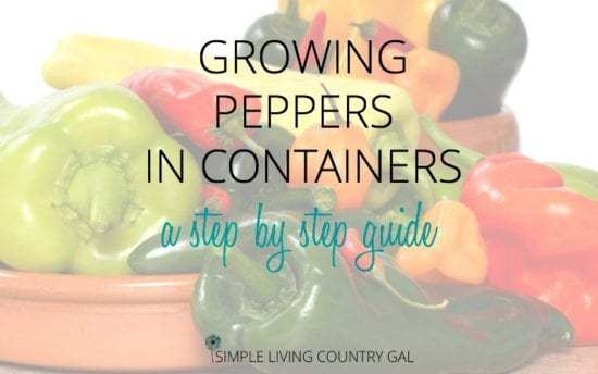 Homestead Blog Hop Feature - Growing Peppers in Containers