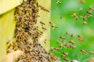Homestead Blog Hop Feature - Homestead Beekeeping