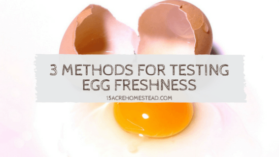Homestead Blog Hop Feature - 3-Methods-for-Testing-Egg-Freshness