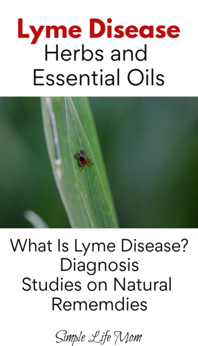 Lyme Disease Herbs and Essential Oils by Simple Life Mom