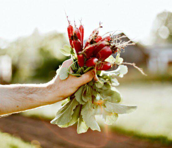 Homestead Blog Hop Feature - When to Plant a Fall Garden
