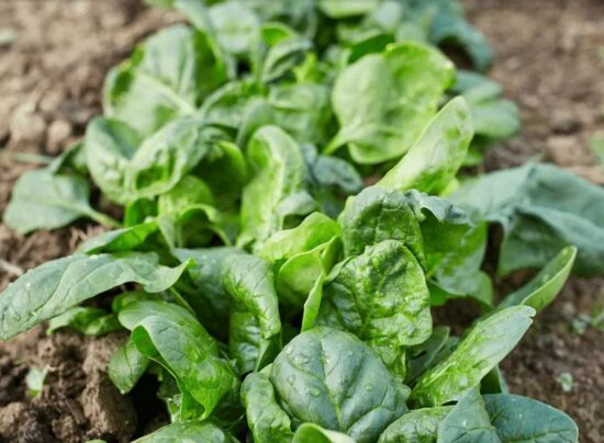 15 Must Have Crops for the Fall Garden