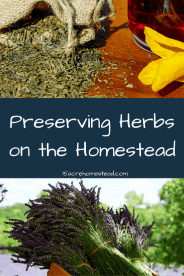 Homestead Blog Hop Feature - Preserving-Herbs-on-the-homestead