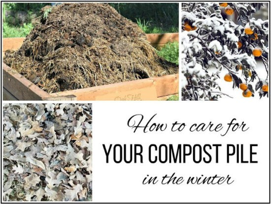 Homestead Blog Hop Feature - How to Care for your Compost Pile