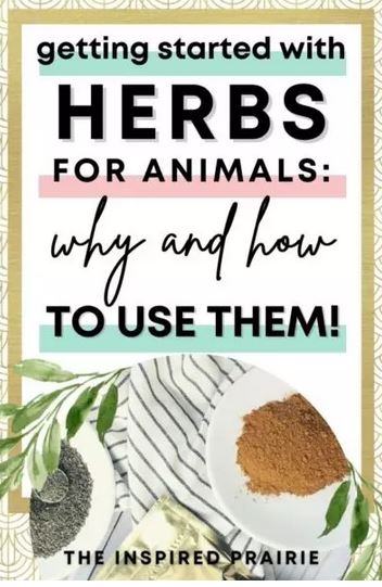 Homestead Blog Hop Feature - getting started with herbs for animals