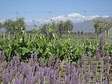 Vendimia in Mendoza, Argentina