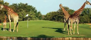 cultural travel immersion - Play golf in South Africa