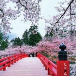 Cherry Blossom Festivals in Japan