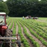 organic farms