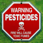 Safe and Natural Pest Control Remedies