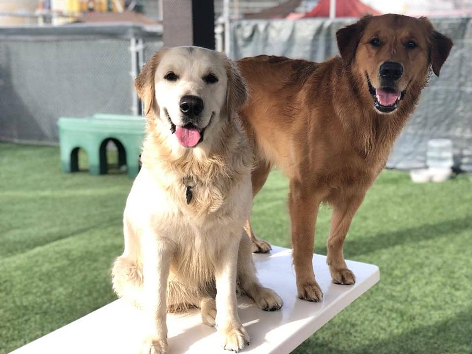 2 dogs at dog daycare play area