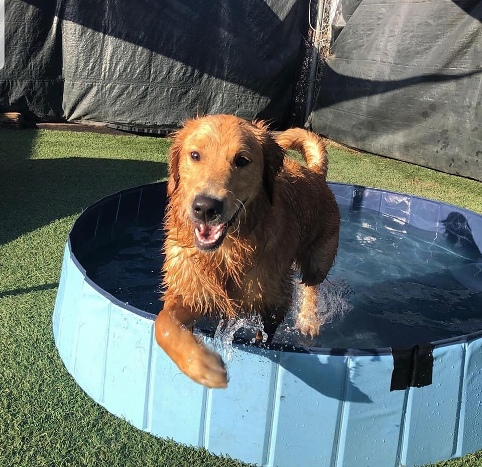 Pool time at Our Dog House