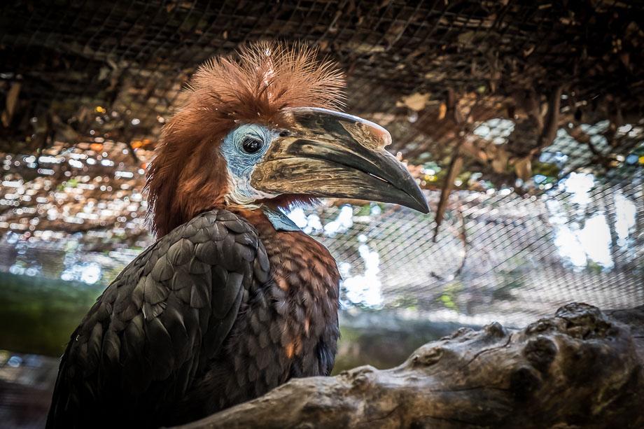 Cape Town world of birds
