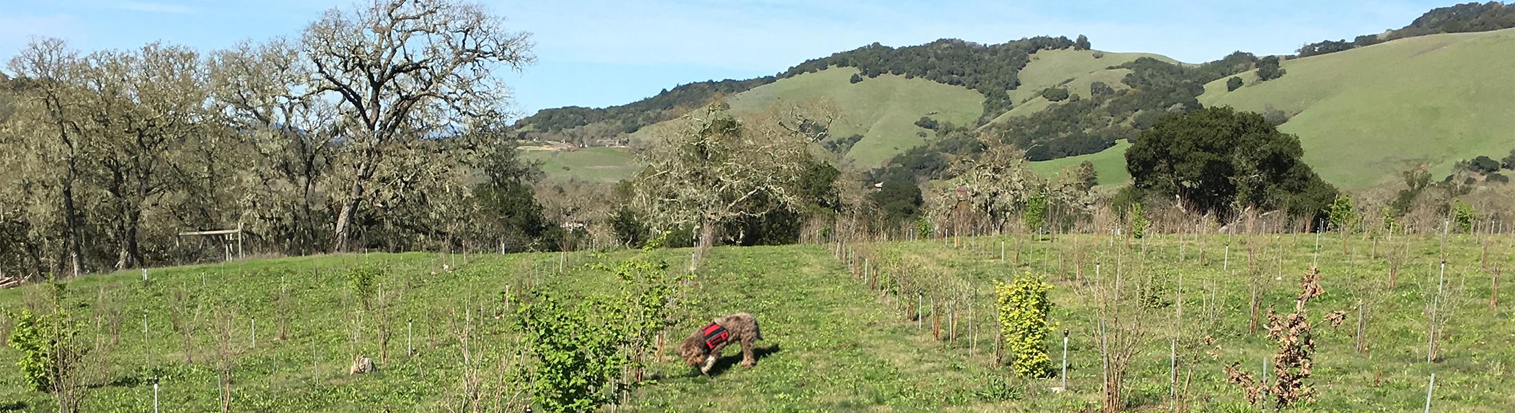 California Truffle Dog Training