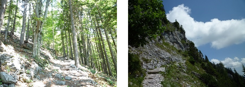 Woods-and-Stony-Trail-austria